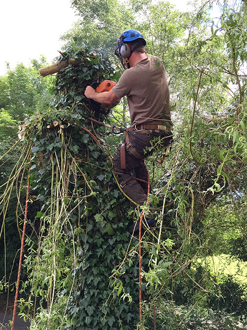 acer-trees-domestic-tree-surgery